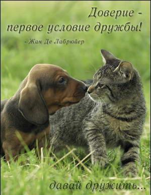 http://o-druzhbe.ru/otkrytki/davaj001.jpg